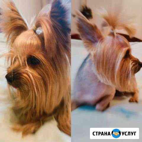 Стрижка собак.Груминг.Йорки Иваново
