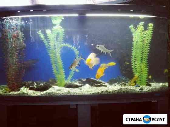 Обслуживание аквариумов Омск
