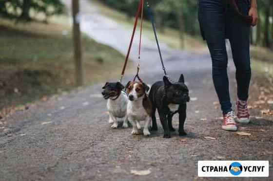 Выгул собак Сыктывкар