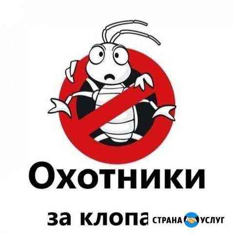 Уничтожение постельных клопов Новосибирск