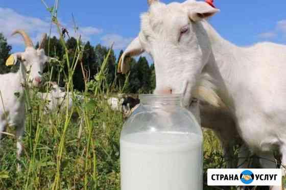 Козье Молоко Чебоксары