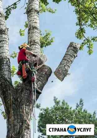 Спил деревьев Ухта