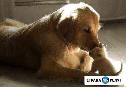 Гостиница для животных (передержка животных) Рыбинск