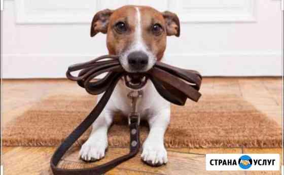 Выгул собак Калининград