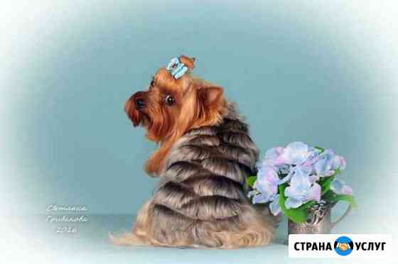 Стрижка собак и кошек Усть-Илимск