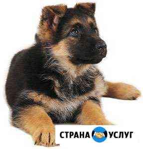 Дрессировка собак Великий Новгород