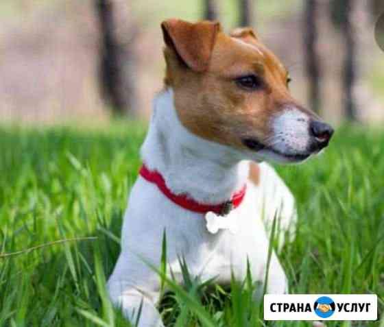 Прогулка с собакой Калуга