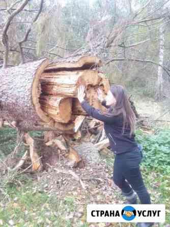 Снос, спил аварийных деревьев Петрозаводск