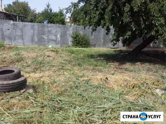 Скос травы камыша Астрахань