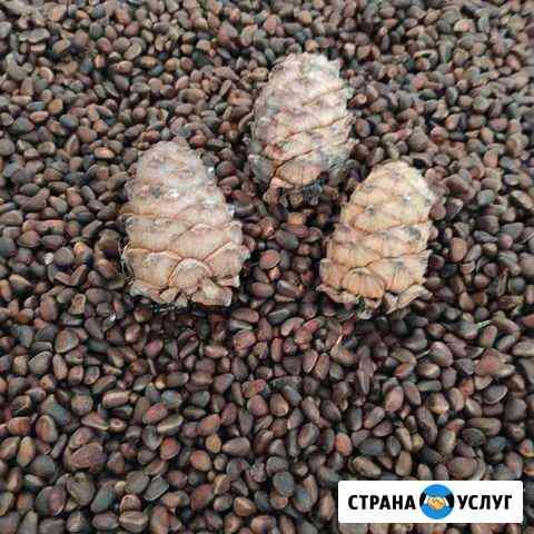 Кедровый орех Кемерово