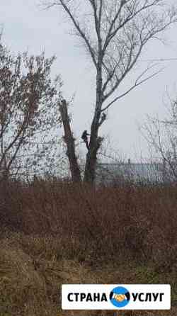 Безопасный спил(валка) деревьев любой сложности Стрежевой