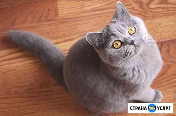 Передержка кошек Тверь