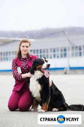 Дрессировка собак. Хендлинг. Груминг/стрижка собак Новокузнецк