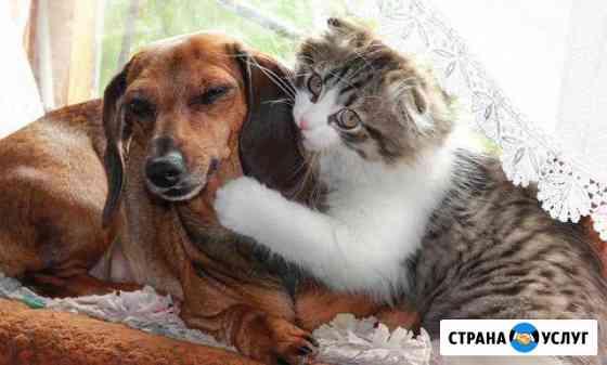 Передержка животных Брянск
