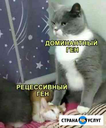 Специалист по дрессировки собак Черкесск