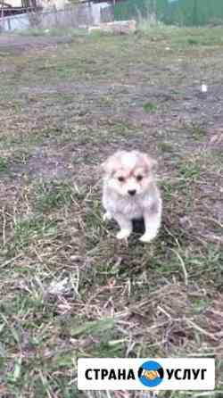 Выгул собак Саранск