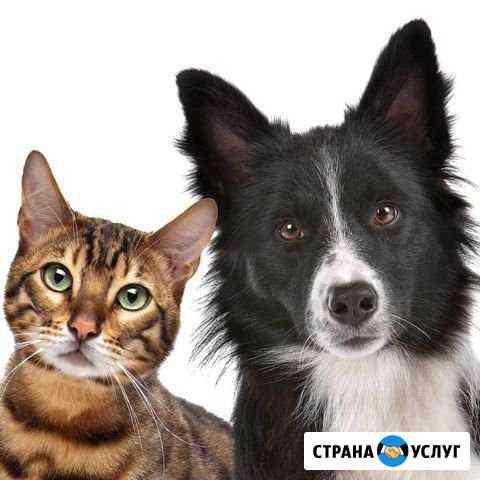 Кастрация котов, собак Балаково