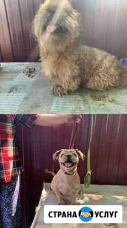 Стрижка собак Суджа