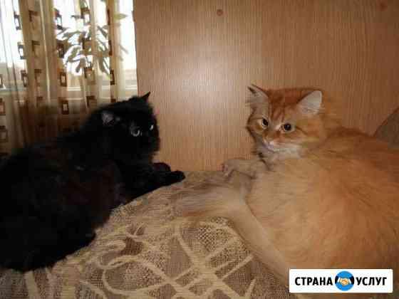 Стрижка кошек,собак,йорков,кастрация котов, выезд Киров
