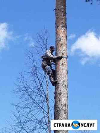 Спил деревьев Сыктывкар
