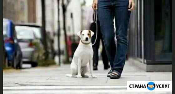 Выгул собак в Находке Находка