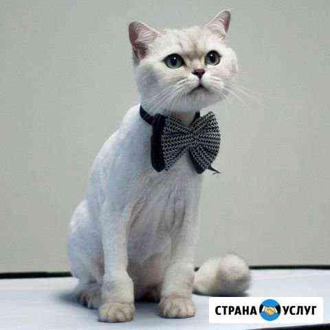 Стрижка собак и кошек, груминг, мелких пород Саратов