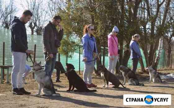 Дрессировка собак Иваново Курсы воспитания Иваново