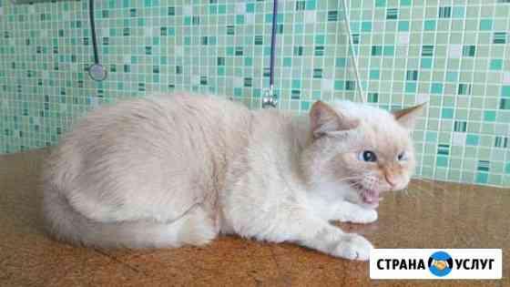 Груминг кошек и собак Омск