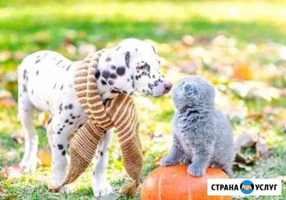 Уход за животными Барнаул