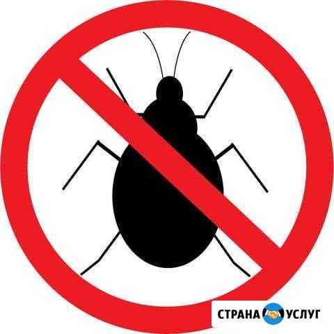 Дезинфекция от клопов и тараканов Северодвинск