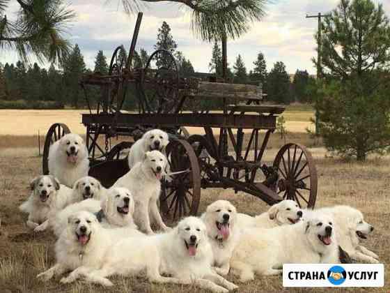 Гостиница для собак Орёл