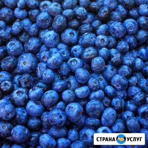 Черника Ханты-Мансийск