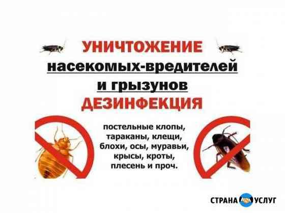 Уничтожение тараканов и клопов.дезинсекция.дезинс Астрахань