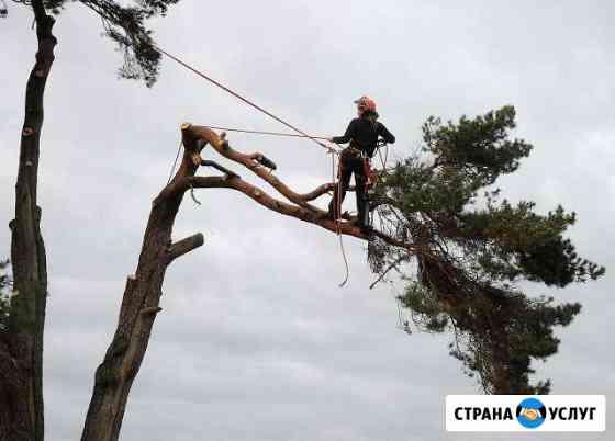 Спил деревьев любой сложности. Удаление деревьев Петрозаводск