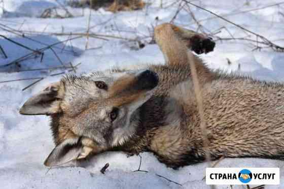 Фотосессия с волком Ярославль