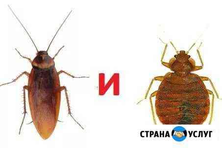 Избавлю Ваш дом от насекомых и грызунов Когалым