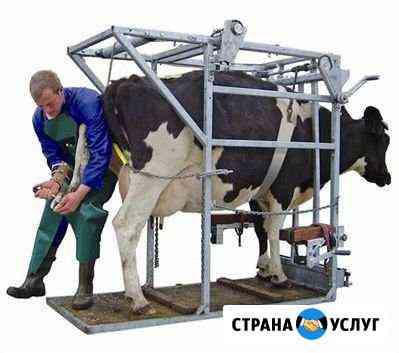 Обработка и лечение копыт крс Калуга