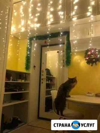 Передержка котов и кошек Псков