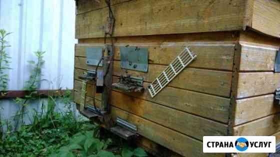 Продажа мёда Кременки