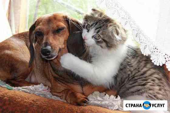 Передержка:кошки, собаки (можно парами). Центр Хабаровск
