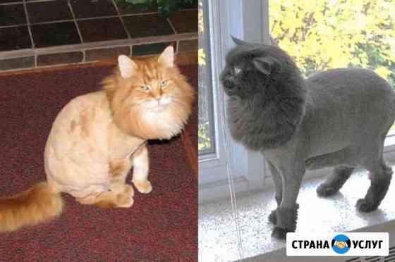 Стрижка котов с выездом на дом Тюмень