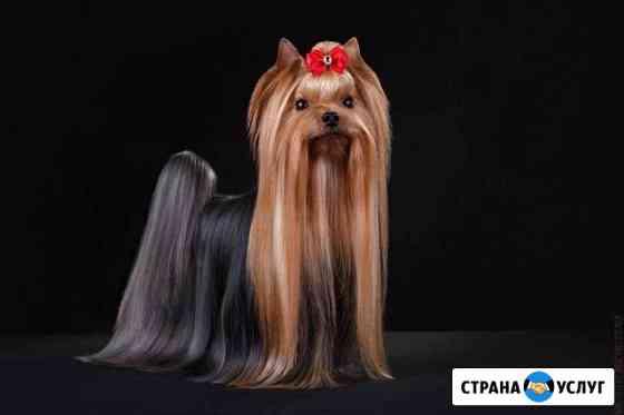 Фотосъемка собак и кошек Киров