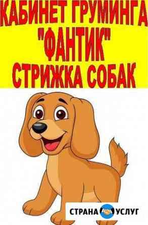 Стрижка собак Липецк