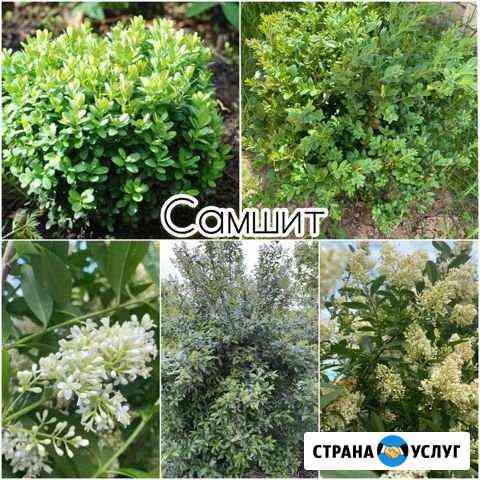 Растения Йошкар-Ола