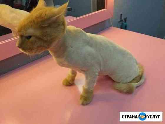 Стрижка кошек и собак Белгород