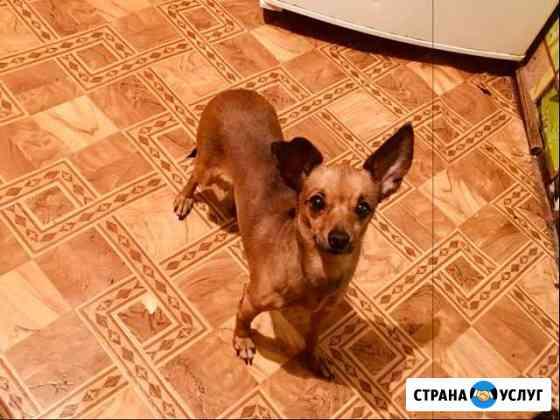 Ветеринарная помощь на дому Брянск