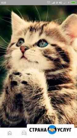 Кастрация котов на дому Саратов