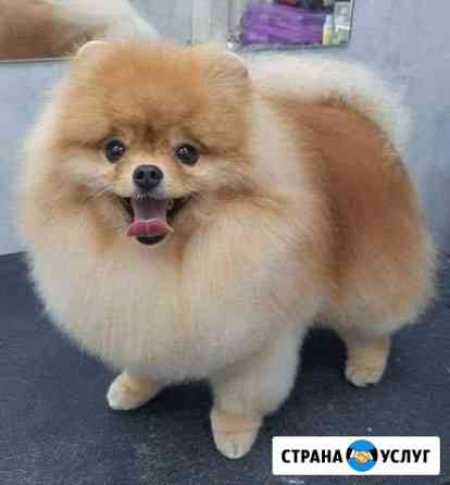 Стрижка собак Астрахань