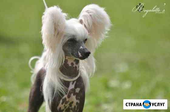 Стрижка собак Псков