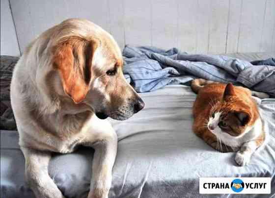 Уход за животными, передержка Омск